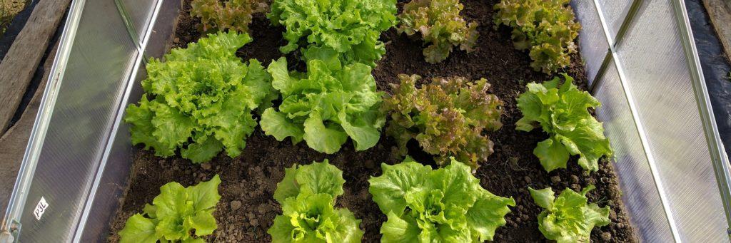 Die 8 besten Aussaat-Tipps für eine reiche Ernte